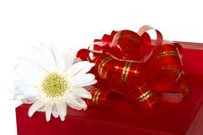 Free Red Gift Box And White Flower Stock Image - 1505841