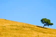 Free Alone Tree Stock Photos - 1506593