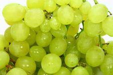 Free Grape Shot Stock Photography - 1508932