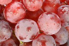 Free Red Grape Shot Royalty Free Stock Images - 1508939