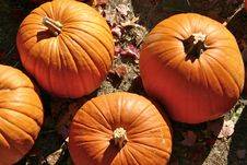 Free Halloween Pumpkins Royalty Free Stock Photography - 1508967