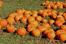 Free Halloween Pumpkins Stock Images - 1508984