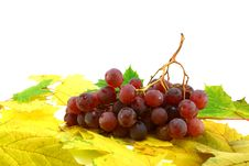 Red Grapes On Leaves Royalty Free Stock Photo