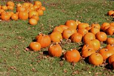 Free Halloween Pumpkins Stock Photos - 1509003
