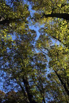 Free Autumn Trees Stock Photos - 1509683