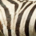 Free Stripes Royalty Free Stock Photography - 15004257