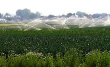 Free Artificial Irrigation In The Agriculture Stock Photography - 15000422