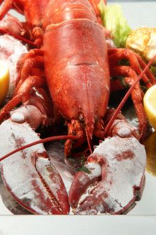 Free FRESH LOBSTER . Stock Photography - 15002342