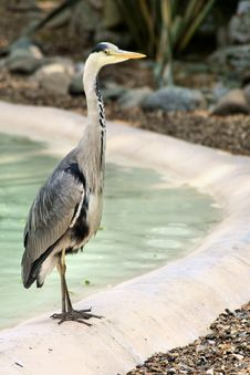 Free Heron/Stork At The Zoo Royalty Free Stock Images - 15002689