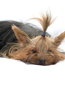 Free Dog Stock Photography - 15004722