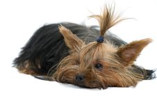 Free Dog Stock Photography - 15004782