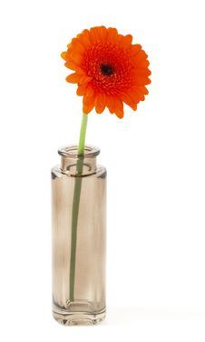 Free Flower In Small Bowl Stock Photography - 15005302