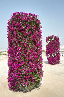 Free Flower Pole Royalty Free Stock Photo - 15005935