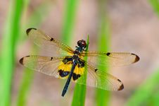 Free Dragonfly Stock Photo - 15006160