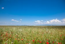 Free Romanian Countryside Royalty Free Stock Photo - 15006185