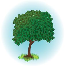 Free Illustration Of Alone Growing Tree Stock Image - 15006751
