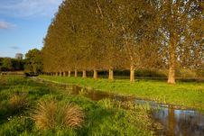 Free River Allen, Wimborne St Giles, Dorset, UK Royalty Free Stock Photography - 15007207