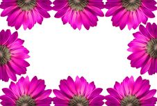Free Frame Of Pink Flowers Royalty Free Stock Photos - 15008728