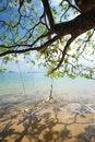 Free Trees On The Beach Stock Photo - 15013260