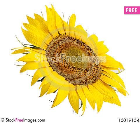 Free Sunflower Flower Stock Images - 15019154