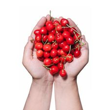 Free Hands Holding Red Cherry Isolated On White Stock Photos - 15011193