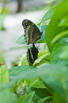 Free Butterfly Stock Images - 15011544