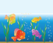 Free Aquarian Small Fishes Are Fed. Stock Photo - 15011640