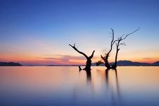 Free Tree Water Scape Stock Photos - 15013013