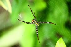 Free Colourful Spider Royalty Free Stock Photo - 15013085