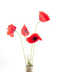 Free Poppy Royalty Free Stock Images - 15013649