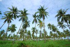 Free Coconut Trees Stock Photo - 15013900