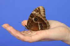 Free Butterfly Sitting On Palm Stock Photo - 15014370