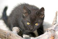 Free Kitty Watching Stock Photos - 15015893