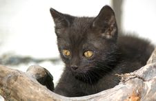 Free 8-weeks-old Kitten Stock Photo - 15015900