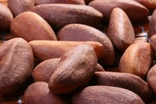 Free Brazil Nut Stock Photo - 15016910