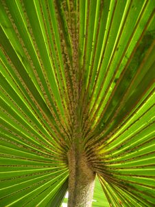 Free A Palm Leaf Royalty Free Stock Photography - 15017057