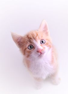 Free Cute Kitten Stock Images - 15017584