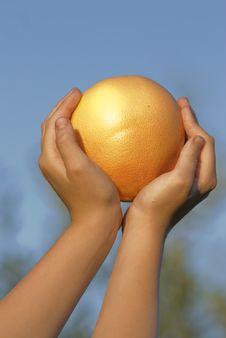 Free Grapefruit Royalty Free Stock Images - 15017619