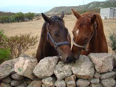 Free Italy, Sardinia Couple Of Race Horse Royalty Free Stock Photo - 15017965