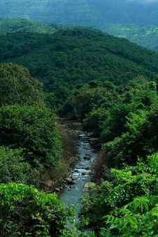 Free Stream Water Flowing Through The Jungle Stock Photos - 15018723
