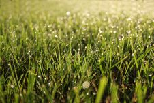 Free Morning Dew Royalty Free Stock Images - 15019179