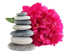 Free Pink Peony And Stones Royalty Free Stock Photos - 15020068