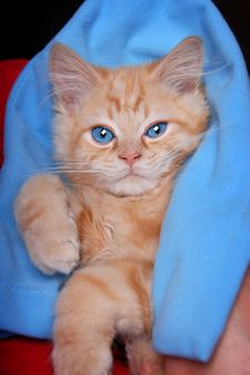 Free Blanket Kitty Stock Images - 15020914