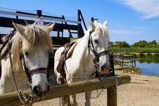 Free Horse Stock Photo - 15023040