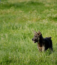 Happy Dog In The Field Royalty Free Stock Photo