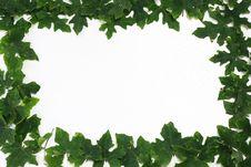 Free Leaf Fame Royalty Free Stock Image - 15024716