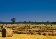 Free Round Hay Bales Royalty Free Stock Photography - 15025997