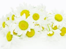 Free Bouquet Of Field Daisy Flowers Royalty Free Stock Images - 15027179