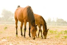 Free Horses Stock Photography - 15027602