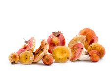 Free Mushrooms Stock Image - 15028061